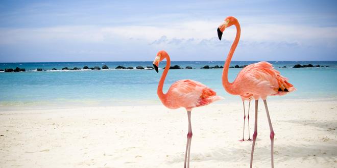Flora y fauna de Yucatán